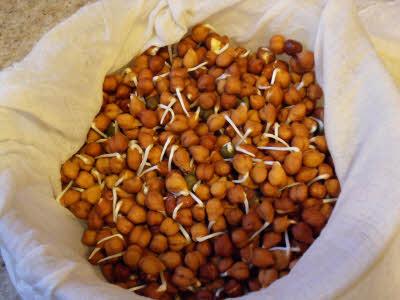 Instant Pot Lentils & Rice (Mujadara)