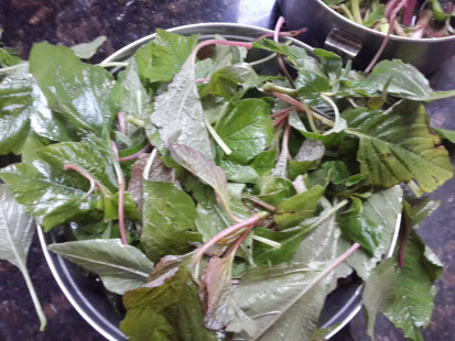 Washed chaulai leaves